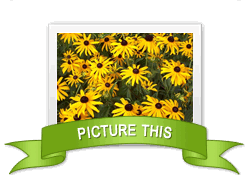 Picture This achievement earned on 8/3/2012 6:28:04 PM.