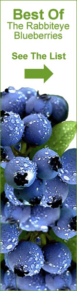 Best of Rabbiteye Blueberries