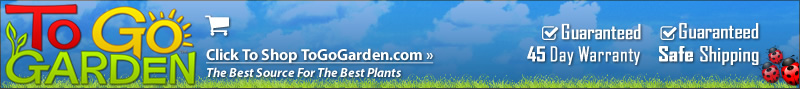 ToGoGarden.com - Buy Plants Trees Shrubs Online